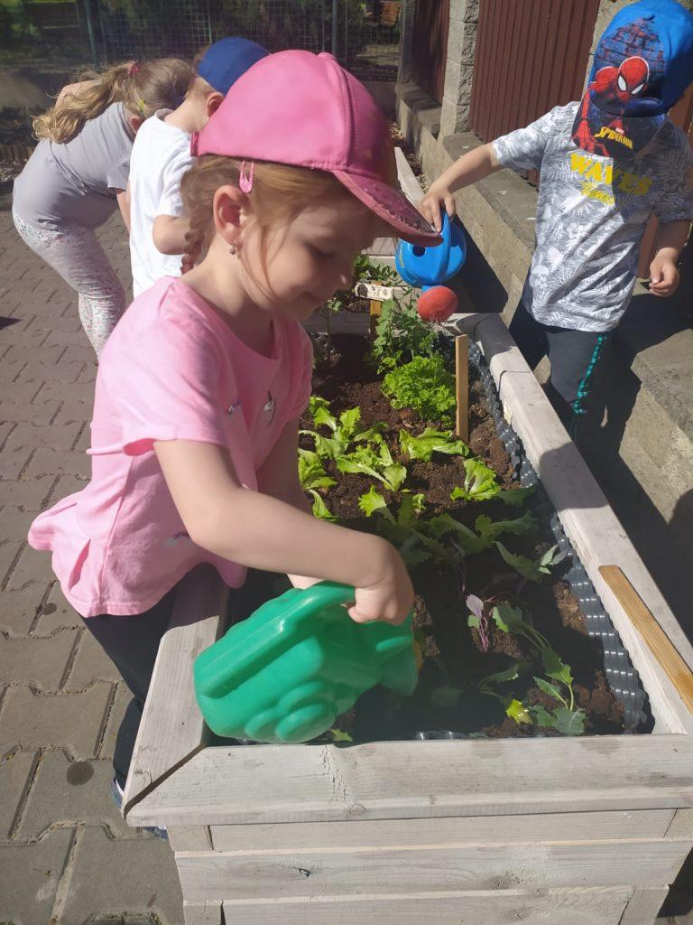Děti zalévají zeleninu.