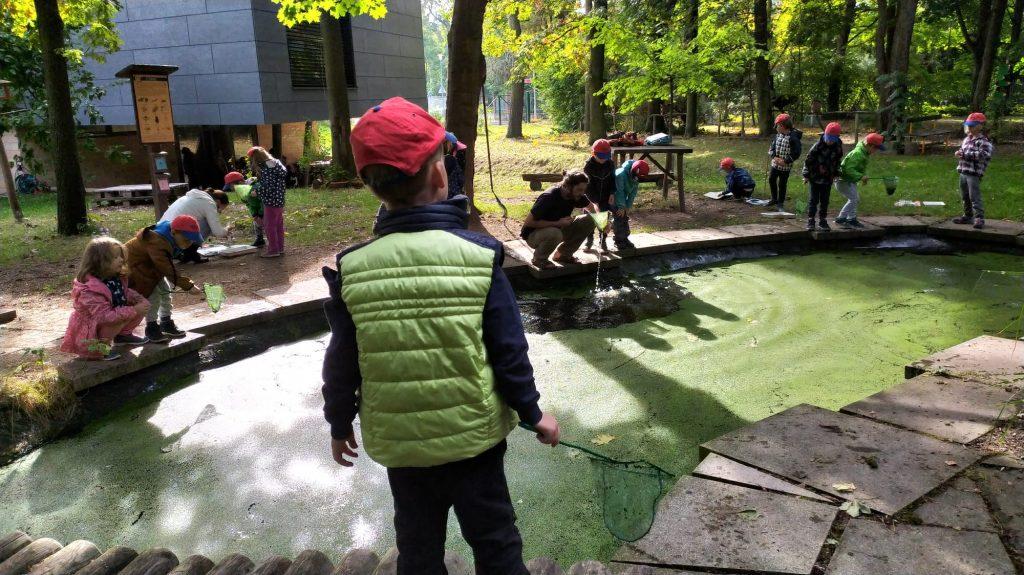 Děti pomocí síťky chytají vodní živočichy.